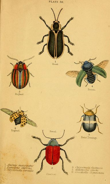 The natural history of beetles  Edinburgh :Henry G. Bohn,1852.