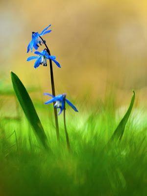 60 fotografías de las flores más hermosas del mundo | Banco de Imágenes Gratis