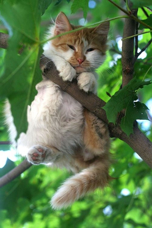 It's not unique to find a cat in a tree, but finding one with this particular pose and expression on his/her face is rather unique.  Hold on kitty!