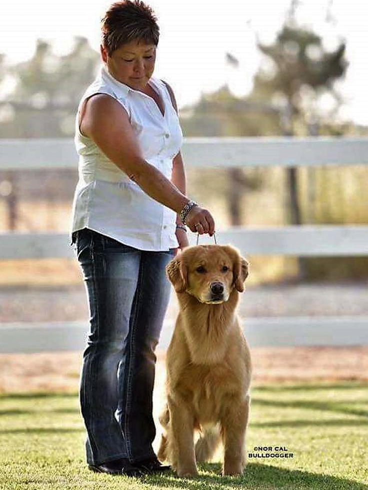 MBISS GCHG CH Razzle-Tempo's Diamonds R A Girl's Best Friend SDHF  (10/18/2012-) Lorelei - Golden Retreiver Breeder - Pug Breeder - Lazy Paws Kennels