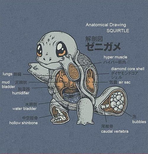 SO CUTE!: Anatomical drawings of Pokémon Squirtle