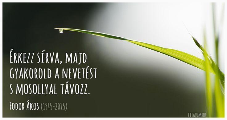 Fodor Ákos idézete az életről.