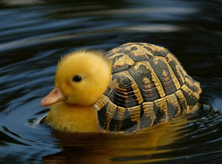 Cute Hybrid Animals