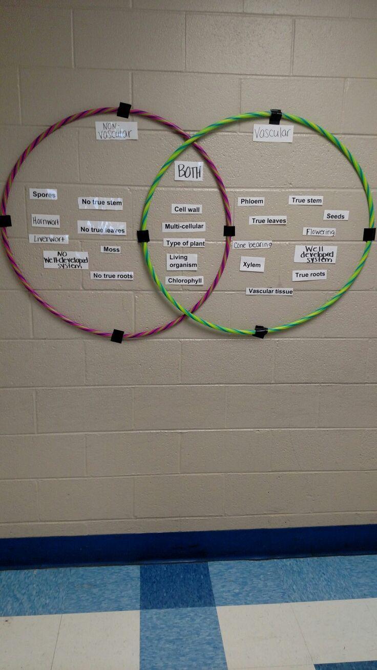 Non vascular & vascular plant hula hoop Venn diagram