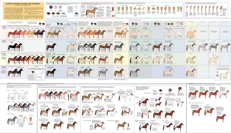 Love it! Now every one will know what I'm talking about when I say I want a Cremello Tabiano!: Colors Charts, Colors Patterns, Hors Colors, Horses Colors, Guide To, Color Patterns, Color Charts, Horses Stuff, Animal