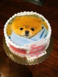 Boo The Worlds Cutest Dog Cake