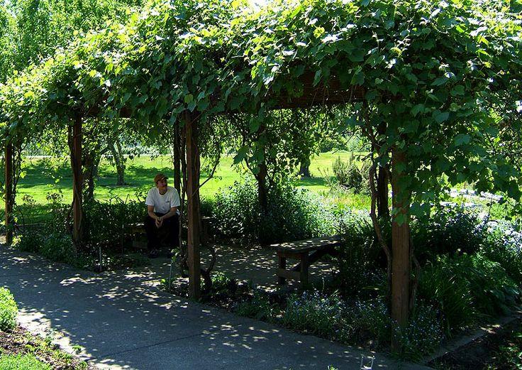 Pergola With Vines : Covers Pergolas, Climbers Grapevine, Pergolas Patios, Vines Pergolas ...