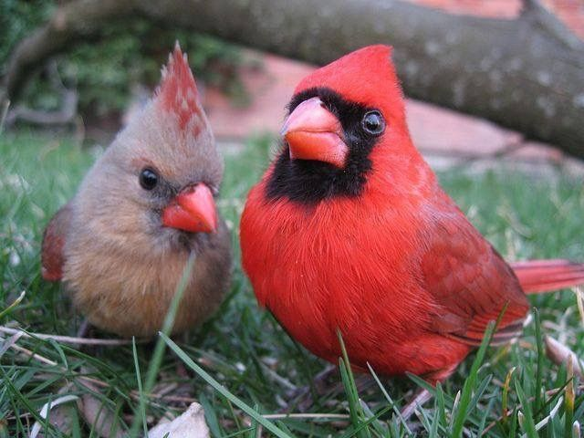 Mr. and Mrs. Cardinal