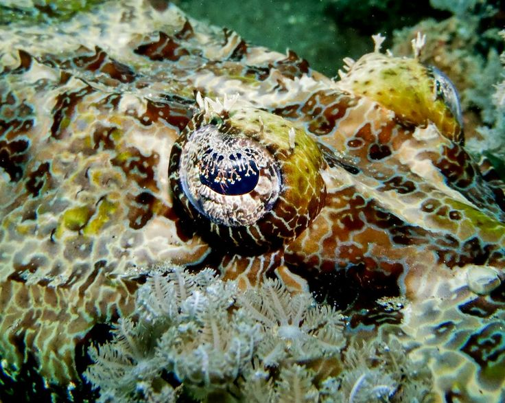 we provide best experience of scuba diving. Grand Luley Resort