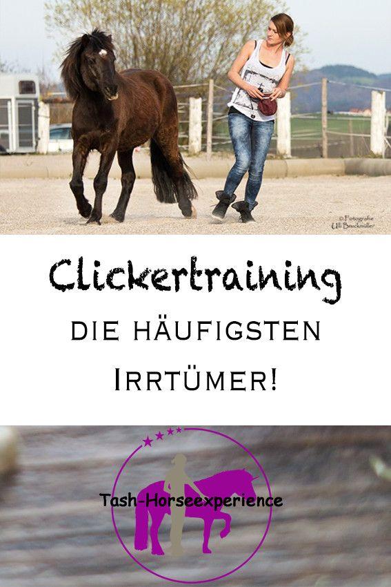 Häufige Irrtümer im Clickertraining mit Pferden
