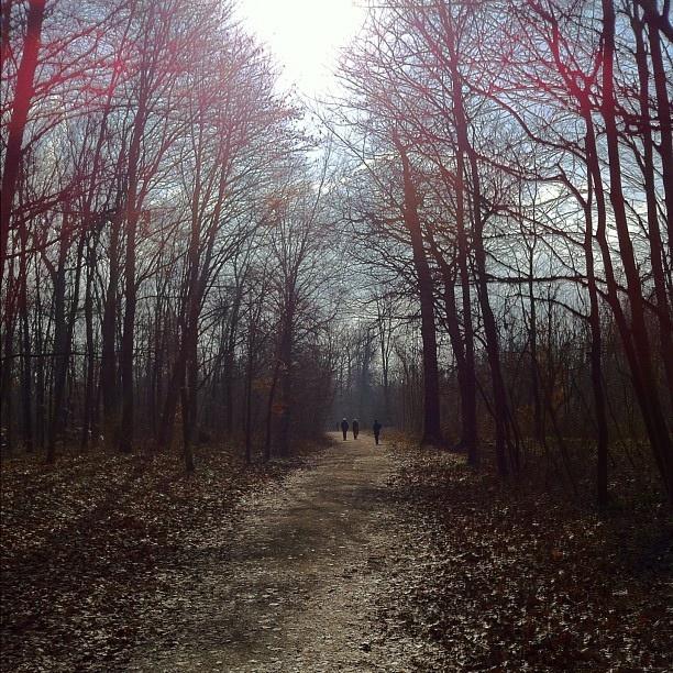 Deep forest #beauty #nature by Yael Rozencwajg