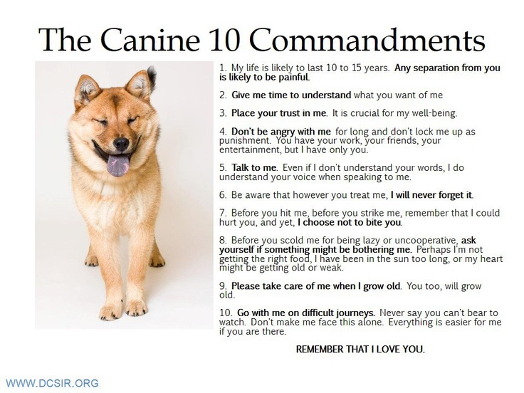 The #Canine 10 Commandments - Poster by DC SIR #Dogs #Shiba