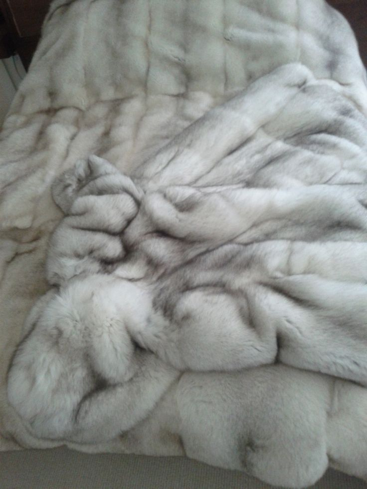 Arctic Fox.  Thick, dense, and so soft.  King size blanket on a queen size bed.  Added decadence: hooded Arctic Fox ankle-length coat waiting for the cold weather to come!
