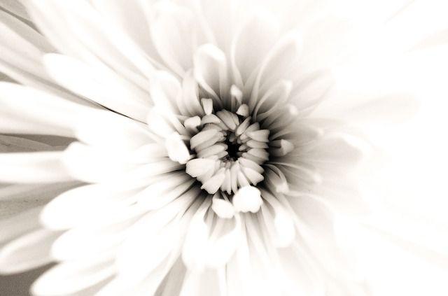 flowers-20270_640.jpg (640×423)