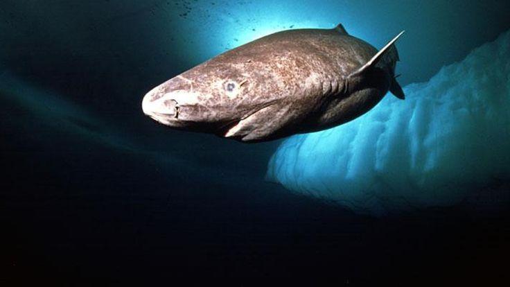 Les requins sont des animaux à la fois fascinants et effrayants. La plupart des gens en ont peur, pourtant il y a beaucoup de choses intéressantes à savoir à leur sujet ! Par exemple, saviez-vous que vous avez beaucoup plu...