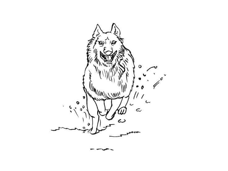 82 best Dessins de Loups à colorier images on Pinterest   Drawings of, Wolves and Coloring book