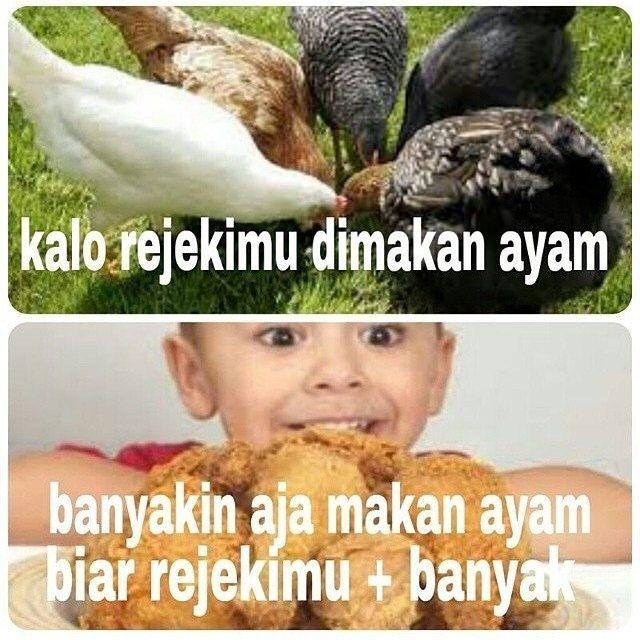ayam vs rejeki