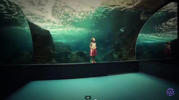 Ολοι γνωρίζουμε ότι η Κρήτη έχει να επιδείξει πανέμορφες θάλασσες, καταπληκτικό φαγητό, καλή ρακή, και αρχαία ιστορία. Λίγοι όμως την επισκέπτονται για να δουν από κοντά το μεγαλύτερο συγκρότημα θαλάσσιας έρευνας, τεχνολογίας και αναψυχής στη Μεσόγειο, το πάρκο Θαλασσόκοσμος. Μέρος του Θαλασσόκοσμου είναι και το Ενυδρείο Κρήτης, γνωστό και ως CretAquarium το οποίο είναι ένα από τα μεγαλύτερα και πλέον σύγχρονα ενυδρεία της Ευρώπης το Ενυδρείο Κρήτης. Βρίσκεται στο Βορειοδυτικό τμήμα της…