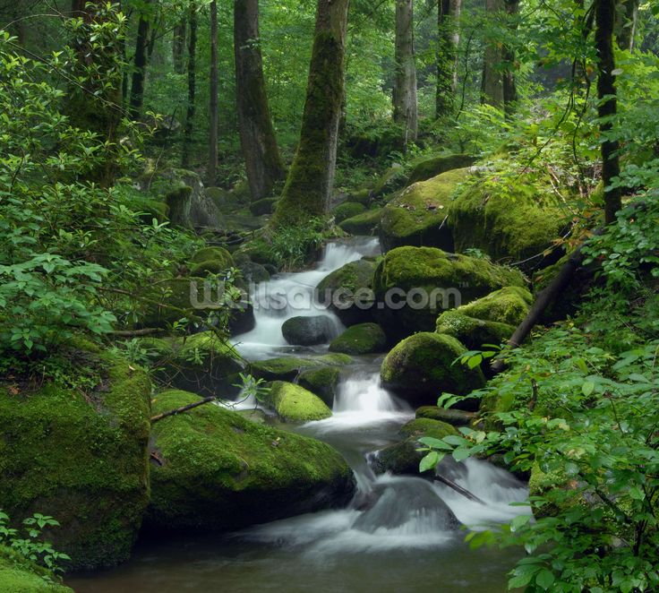 Mossy Waterfall wall mural 9 best Wallpaper