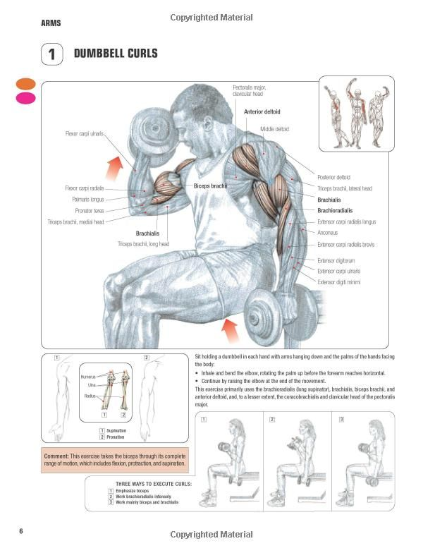 Strength Training: The Strength Training Anatomy Workout Pdf