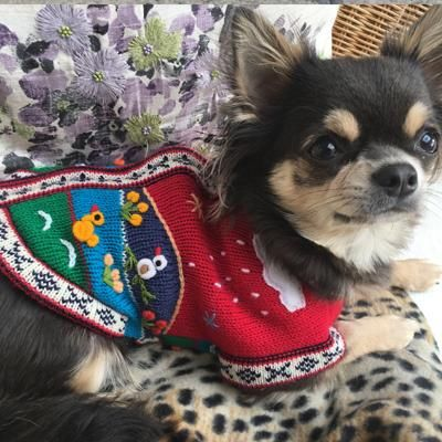 Hand Embroidered Peruvian Dog Jumper Red 25cm – My Chi and Me