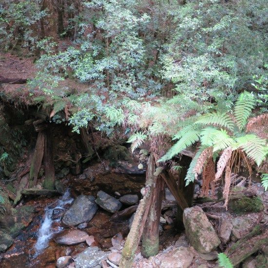 On the way to Montezuma Falls | Snapshot Inspiration: My favourite bits of Tassie | On the Road to Travel