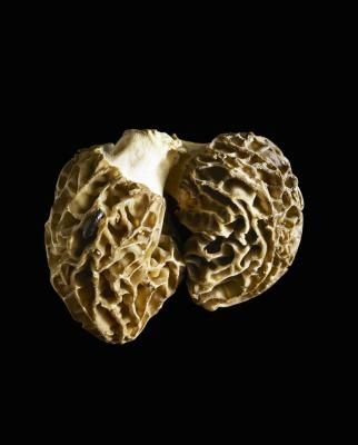 The Requirements for Growing Truffles