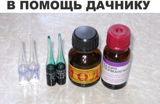 Йод аптечный – отличное средство для опрыскивания земляники перед цветением. Он способствует активному росту земляники и защищает ее от болезней. Рецепт таков: 5-10 капель йода на 10 л воды.