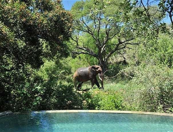 Tuningi Safari Lodge, Madikwe Game Reserve