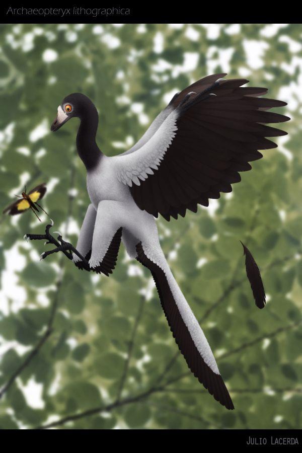 "fuckyeahdinoart: "" Danke, Urvogel by ~karkajou "" Archaeopteryx"