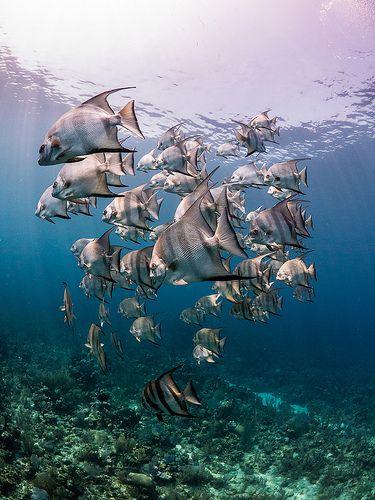 Coral reef fish