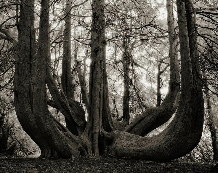 These are the oldest trees on Earth...