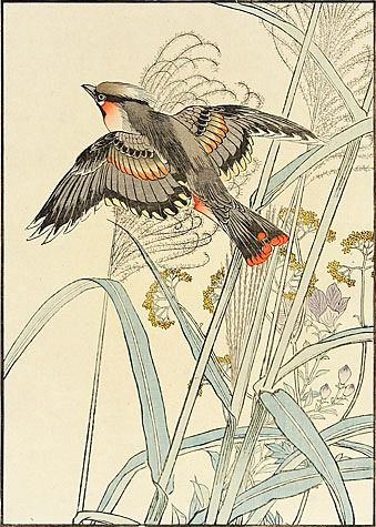 Japanese Silver Grass, Gentian, Eastern Waxwing ~ by Imao Keinen