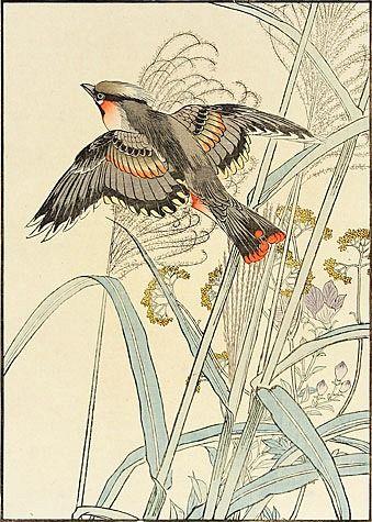 Imao Keinen (Japanese, 1845-1924). Japanese Silver Grass, Gentian, Eastern Waxwing. 1891 | JV