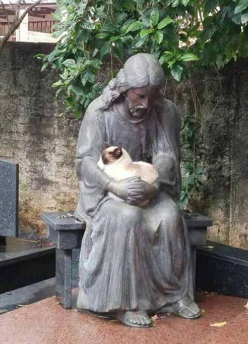 Cat naps with Jesus statue.