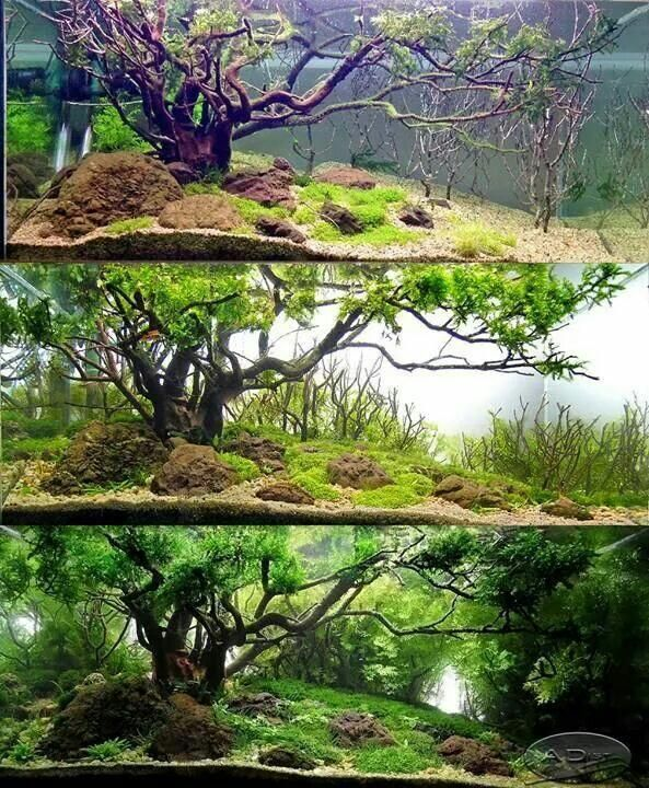 Best 25+ Aquascaping Ideas On Pinterest