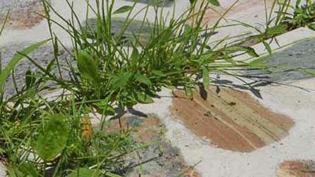 Unkraut jäten mag kein Gärtner, aber Unkrautvernichter sind ungesund. Mit diesen zehn Tipps entfernen Sie das Unkraut in Beet, Rasen und Gartenweg.