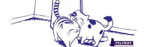 Los gatos y el miedo a los petardosMiau, el blog de gatos de Maskokotas