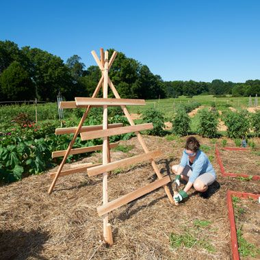 Simple squash trellis--use this for the heavier squashes (butternut, acorn & spaghetti)--takes up less space