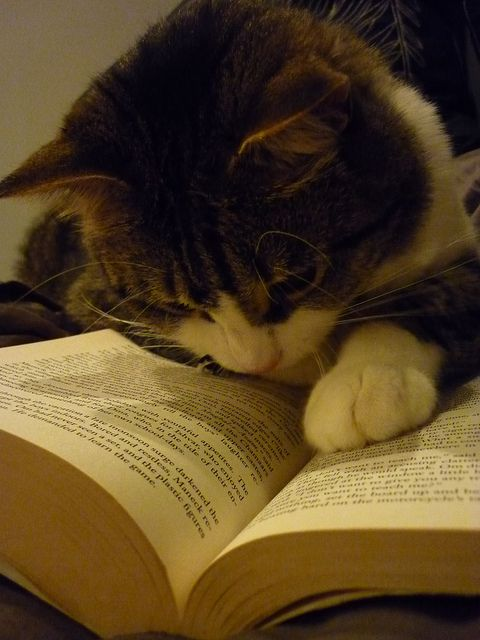 """""""Reading Cat,"""" by Amanda K, via Flickr -- This adorable kitty is searching studiously, upside down, no less!"""