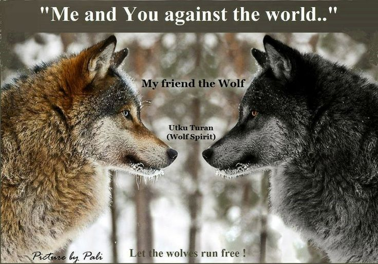 wolf run black personals Wolf run's best 100% free online dating site meet loads of available single women in wolf run with mingle2's wolf run dating services find a girlfriend or lover in wolf run, or just have.