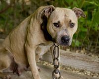 Please sign and repin the petition:  Tell Iowa Rep. Steve King to Stop Opposing Animal Protection!