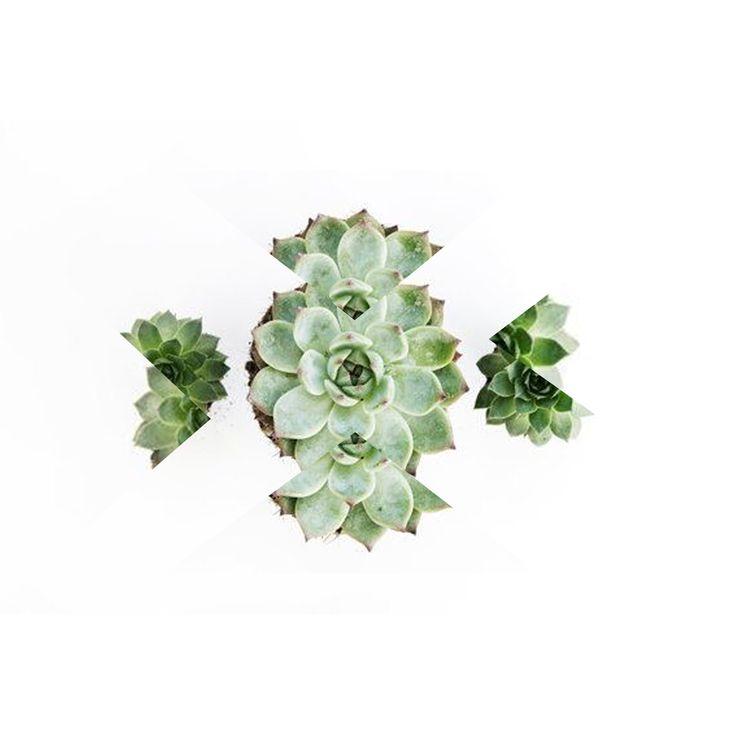 Graphic cactus #letsgoallbotanical