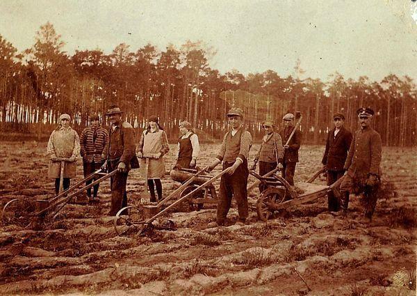 Prace odnowieniowe wNadleśnictwie Promno  –siew sosny isadzenie brzozy  –lata 30 .