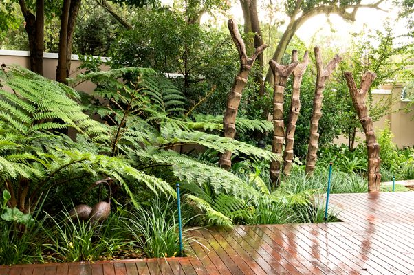 Tropical bed with African Ladders surrounded by Tree ferns and Liriope