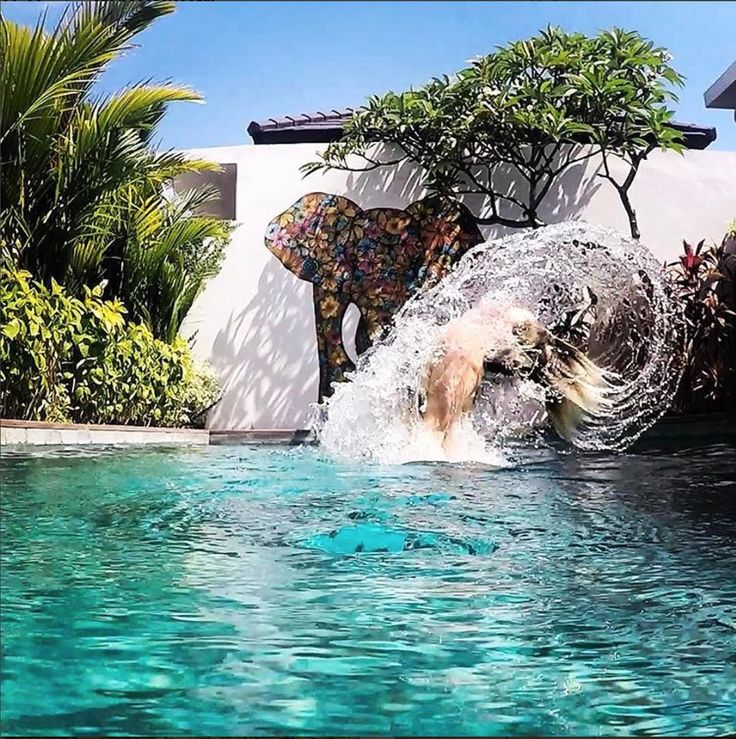 Pool, Private villa, Bali, Indonesia, Travel, holiday, honeymoon, summer, elephant, art, Mural, 4Quarters
