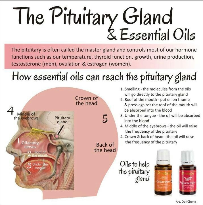 the pineal gland keeping the endocrine system on track The endocrine system pages 442-445 bigidea your endocrine sys- a pineal gland p i t u i ta ry gn ib posterior lobe of the pituitary gland chapter 16 endocrine and reproductive health vocabulary practice.