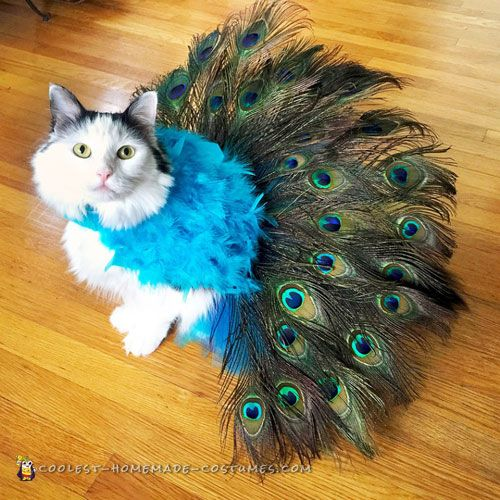 Here's a pretty Peacock cat costume I made for Sophie, our 4 year old rescue kitty. Sophie is very outgoing and has no problem wearing hats or costumes. She loves attention and so I thought why not try to make a pretty peacock costume for her to proudly strut around in that would match her personality.