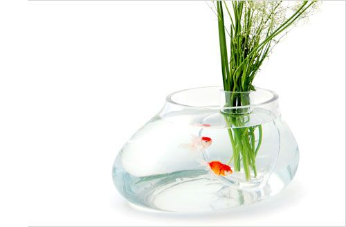 25 unique vase fish tank ideas on pinterest betta fish bowl betta fish tank and betta aquarium. Black Bedroom Furniture Sets. Home Design Ideas