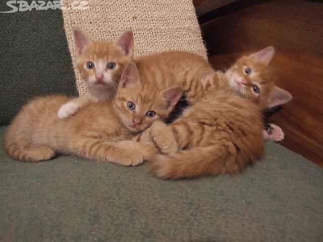 Koťata - obrázek číslo 1